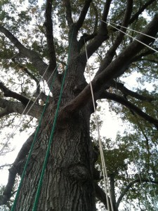 Ropes set in Mary Alice